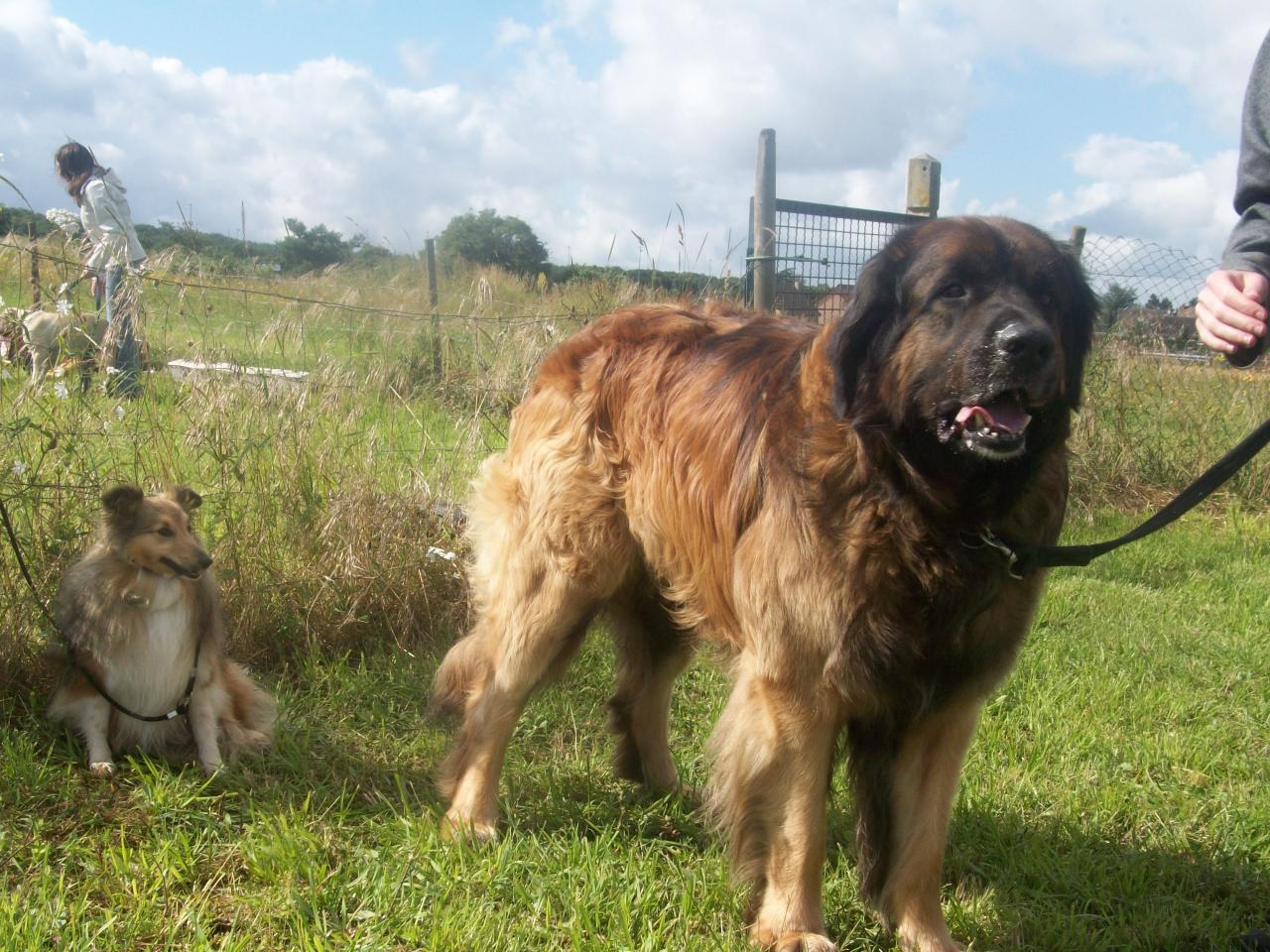 Lolo & Basile